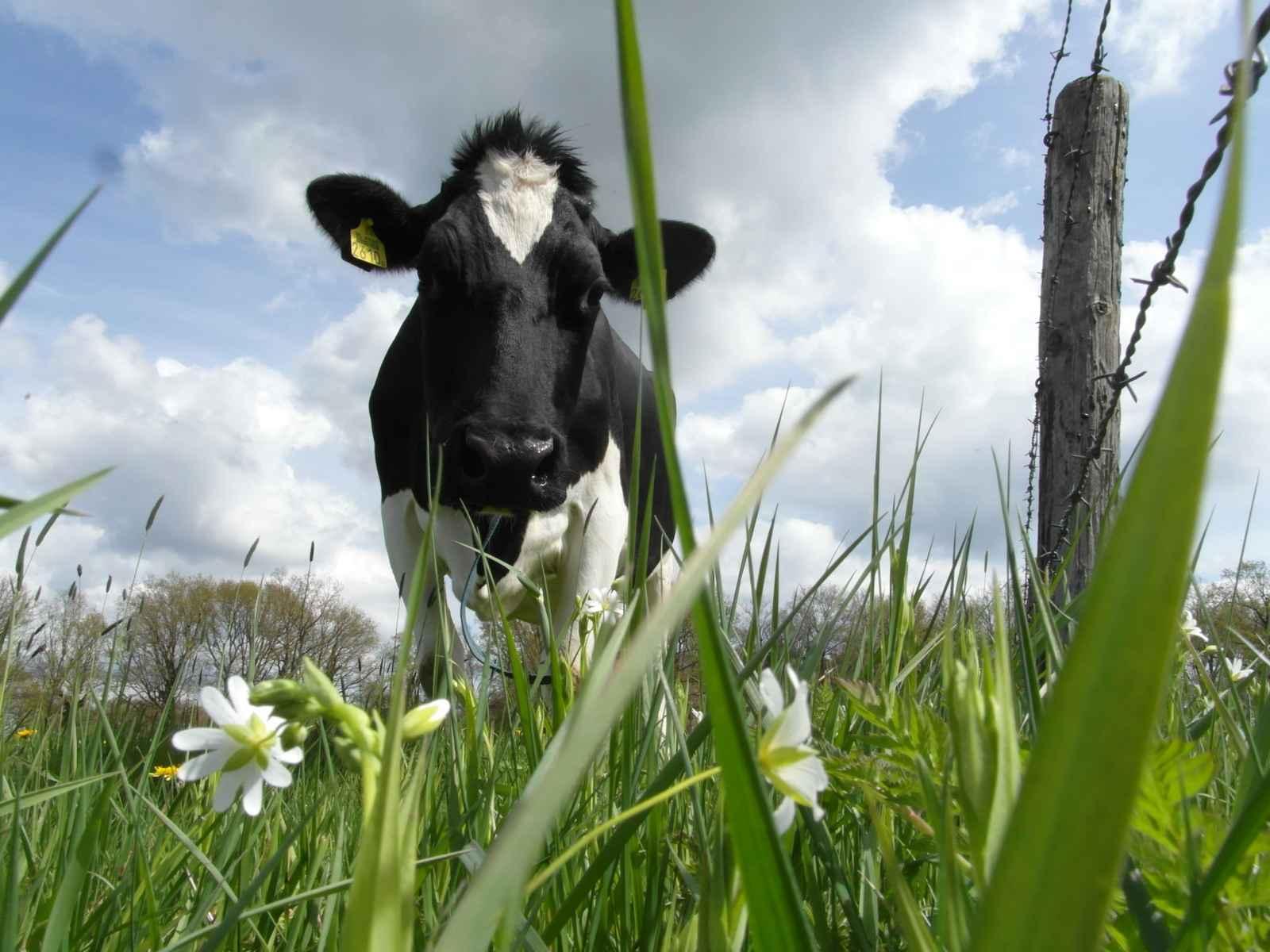 Koeien in wei, miMakker Bakkie Blog www.neusvoorcontact.nl